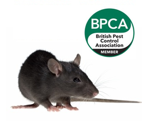 Pest Control Leeds | Pestek Provide Professional Pest Control Services in Leeds West Yorkshire