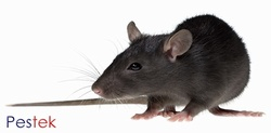 Rat control services in Leeds