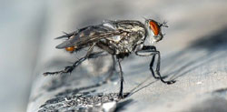 Why do I have flies in my house during winter?
